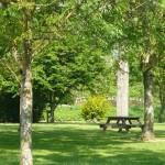 Table de pique-nique à l'ombre des arbres